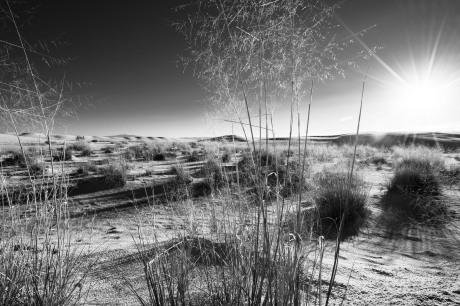 white sands 29
