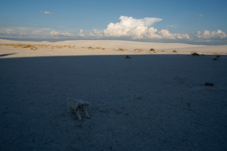 WHITE SANDS ANGIE